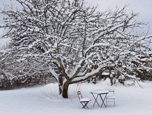 vinter i ljungby trädgård